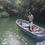 Mangrove Amazonas